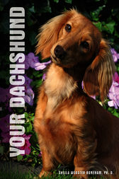 Your Dachshund by Sheila Webster Boneham