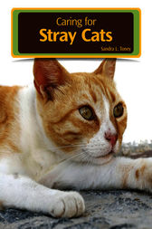 Caring for Stray Cats by Sandra L. Toney