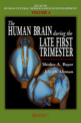 The Human Brain During the Late First Trimester by Shirley A. Bayer