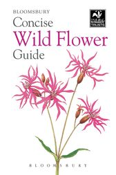 Concise Wild Flower Guide by Bloomsbury