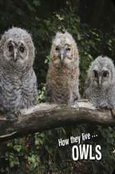 How they live... Owls by David Withrington