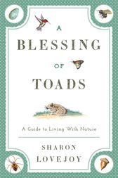 A Blessing of Toads by Sharon Lovejoy