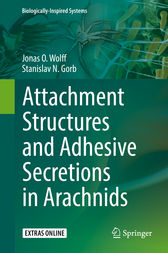 Attachment Structures and Adhesive Secretions in Arachnids by Jonas O. Wolff